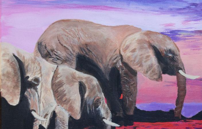 Safari Elephant River